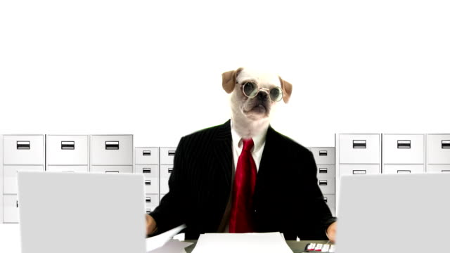 dog people clerk - tax form stock videos & royalty-free footage