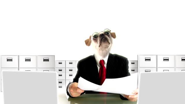 dog people clerk - job interview stock videos & royalty-free footage