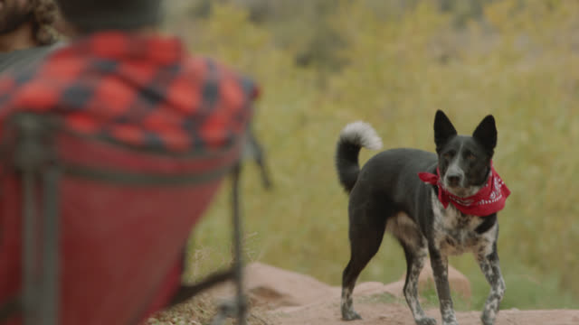 vidéos et rushes de dog perks up and wanders over to inspect food in dog bowl at campground. - curiosité