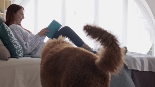 dog playing around with his blanket while his owner is reading a book and relaxing - blanket stock videos & royalty-free footage