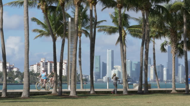dog playing, cyclists, and people enjoying beach life in miami - gardening stock videos & royalty-free footage