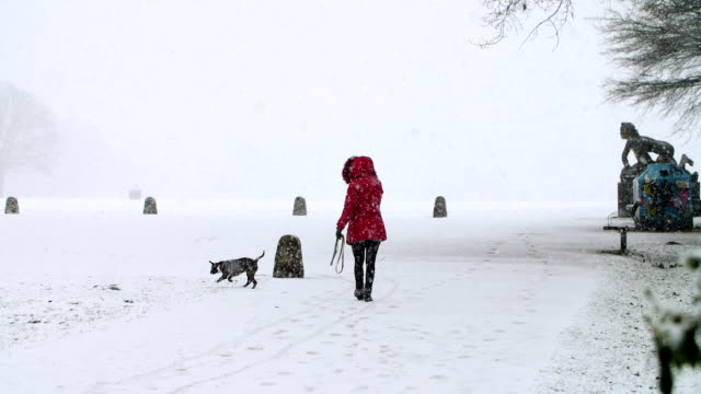 dog playing in snow in slow motion - off leash dog park stock videos & royalty-free footage