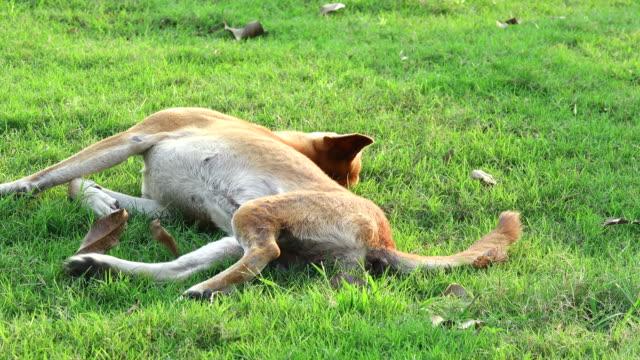 Hund auf einer Wiese spielen