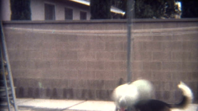 dog playing tetherball 1960's - archives stock videos & royalty-free footage