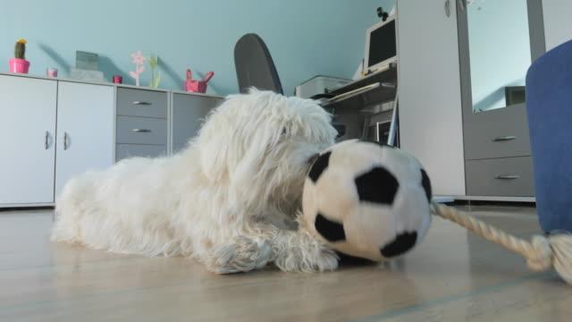 MS LA Hund spielen mit einem Spielzeug