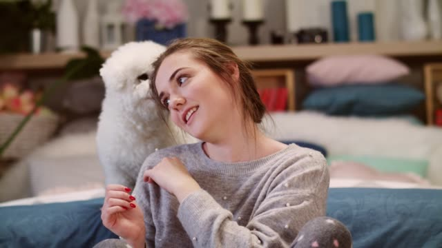 dog playing with his owner's hair do - pet bed stock videos and b-roll footage