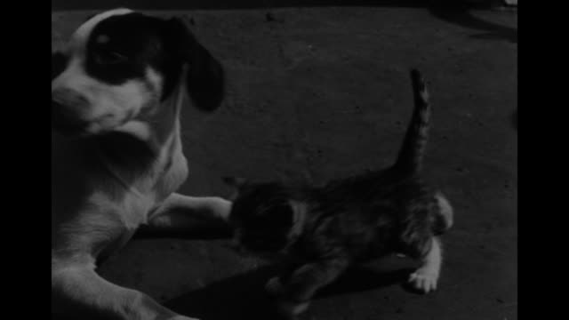 MCU dog plays with kitten and cat / MS French sailor plays with dog and kitten on deck of ship as other sailors look on