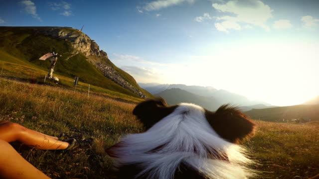 vídeos de stock e filmes b-roll de cão ponto de vista - câmara vestível
