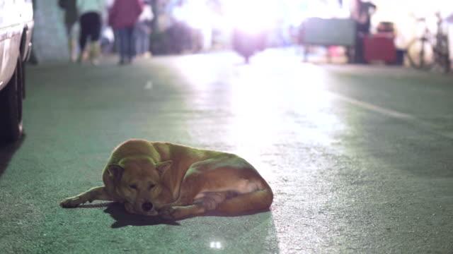 vidéos et rushes de chien se préparent à dormir - k pop