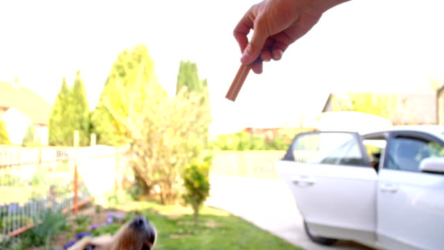 slo mo dog reaching a snack - dog biscuit stock videos & royalty-free footage