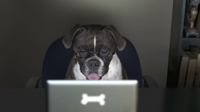 dog reads a tablet in her office - dog stock videos and b-roll footage