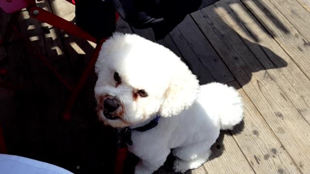 Dog Receiving Table Scraps