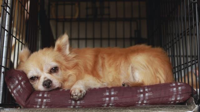 stockvideo's en b-roll-footage met een hond ontspannen in de kennel. - neus van een dier