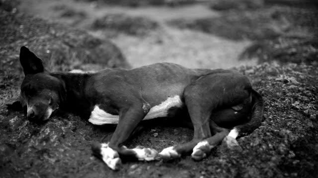 犬の休息と睡眠の岩の上 - 動物の脚点の映像素材/bロール