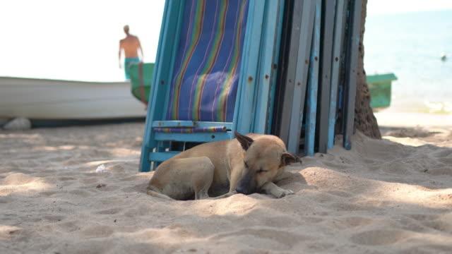 vídeos y material grabado en eventos de stock de perro descansando en la playa - acostado