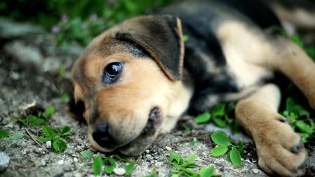 Hund som vilar