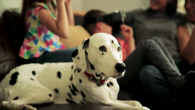 dog resting with family - dalmatian dog stock videos and b-roll footage