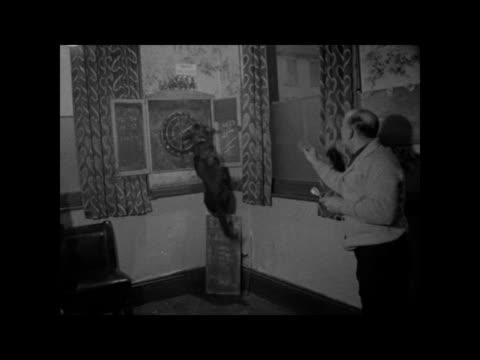 dog retrieves darts; england: london: dalston: int bv man playing darts in pub cms dog waits excitedly dart board with dart in man throws dart dog... - ダーツバー点の映像素材/bロール