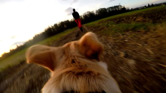 slo mo pov dog running after his owner - pursuit sports competition format stock videos and b-roll footage