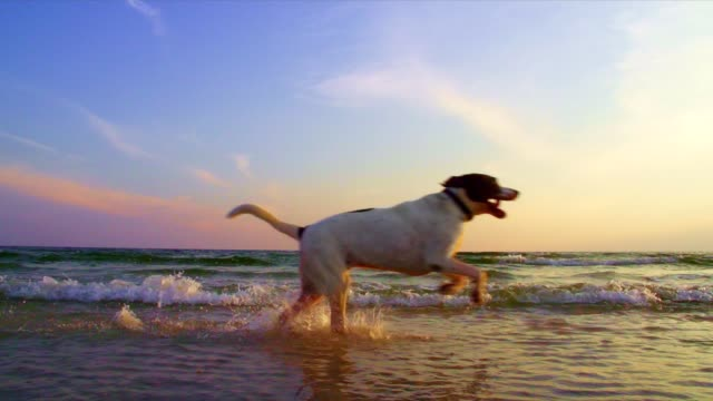 dog running at the beach - dog stock videos and b-roll footage