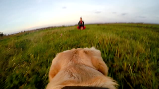slo mo pov dog running back to his owner - wearable camera stock videos & royalty-free footage