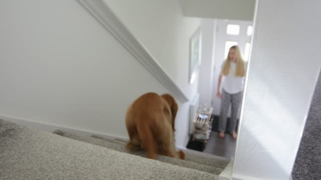dog running down stairs - pet owner stock videos & royalty-free footage