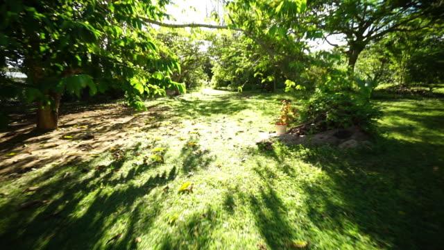 dog running in garden