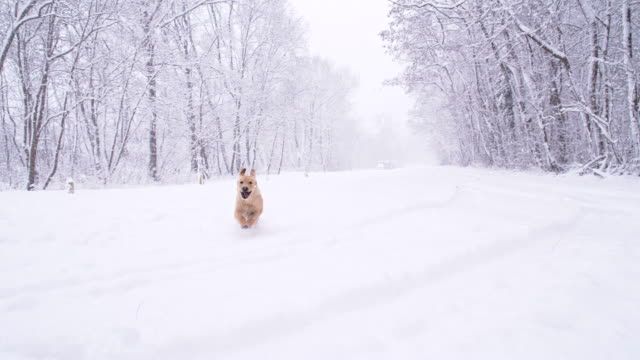 slo mo dog running in the snow - snow stock videos & royalty-free footage