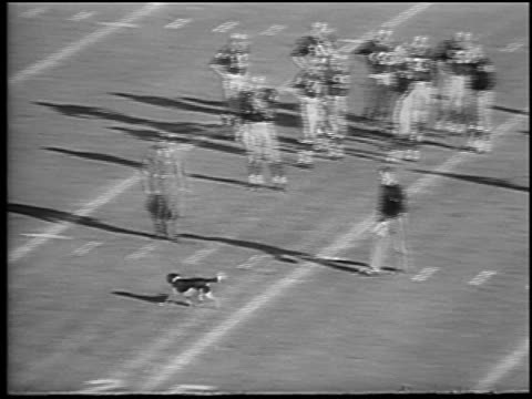 vídeos de stock e filmes b-roll de b/w 1965 dog running on field at army vs navy football game / philadelphia / newsreel - cadete