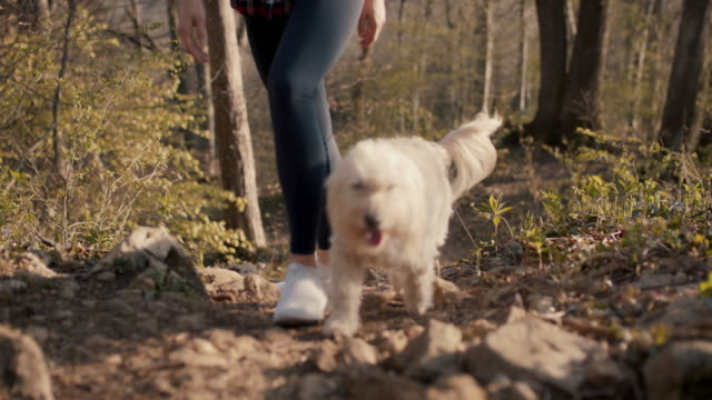 dog running on footpath in forest - pet owner stock videos & royalty-free footage