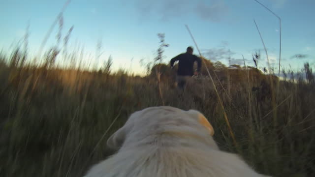 POV Dog Running though a Field with Owner