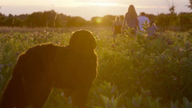 vídeos y material grabado en eventos de stock de un perro que su familia - animal family