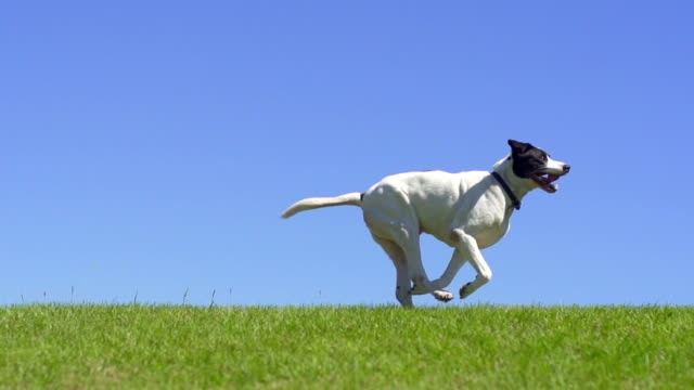 dog running - pets stock videos & royalty-free footage