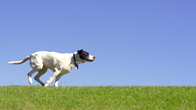 dog running - retrieving stock videos & royalty-free footage