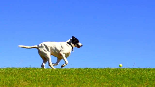 Hund Laufen