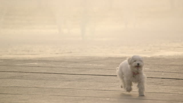 dog running - lost stock videos & royalty-free footage