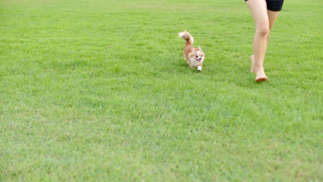 Dog running with joy