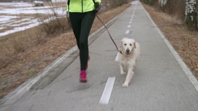 hund mit besitzer entlang weg bei kaltem wetter - haustierleine stock-videos und b-roll-filmmaterial