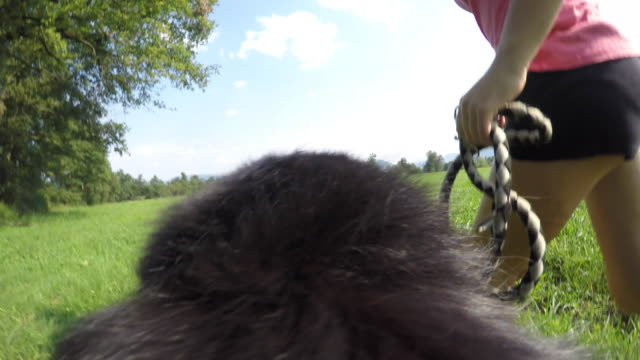 POV Dog running with owner in sunshine