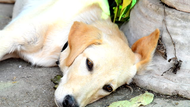 Hund krank
