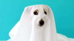 Dog sit as a ghost scary and spooky