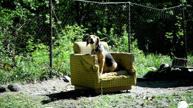 Dog sitting in armchair