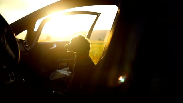 dog sitting in car looking away - joy stock videos & royalty-free footage