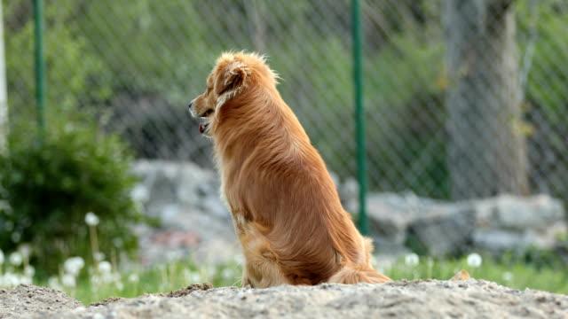 vídeos de stock, filmes e b-roll de cachorro sentado na areia - parte do corpo animal