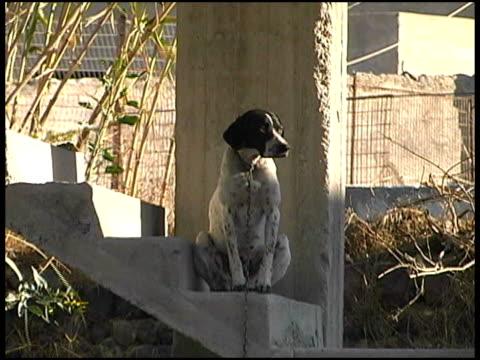 vídeos y material grabado en eventos de stock de perro sentado en concreto paso - formato buzón