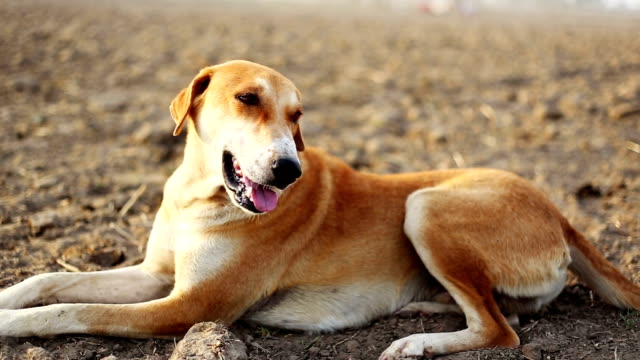 vídeos y material grabado en eventos de stock de sesión de perro al aire libre en la naturaleza - perro cazador