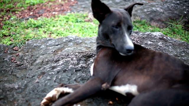 vidéos et rushes de portrait de chien assis - regarder ailleurs