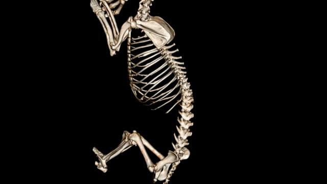dog skeleton - animal skeleton stock videos & royalty-free footage