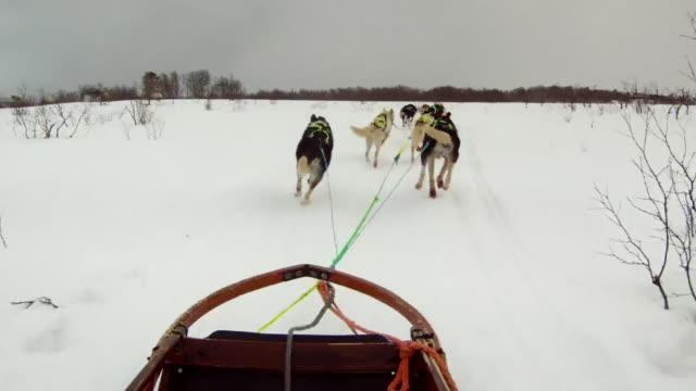 dog sled 13