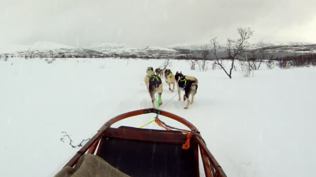 dog sled 3 - husky stock videos & royalty-free footage